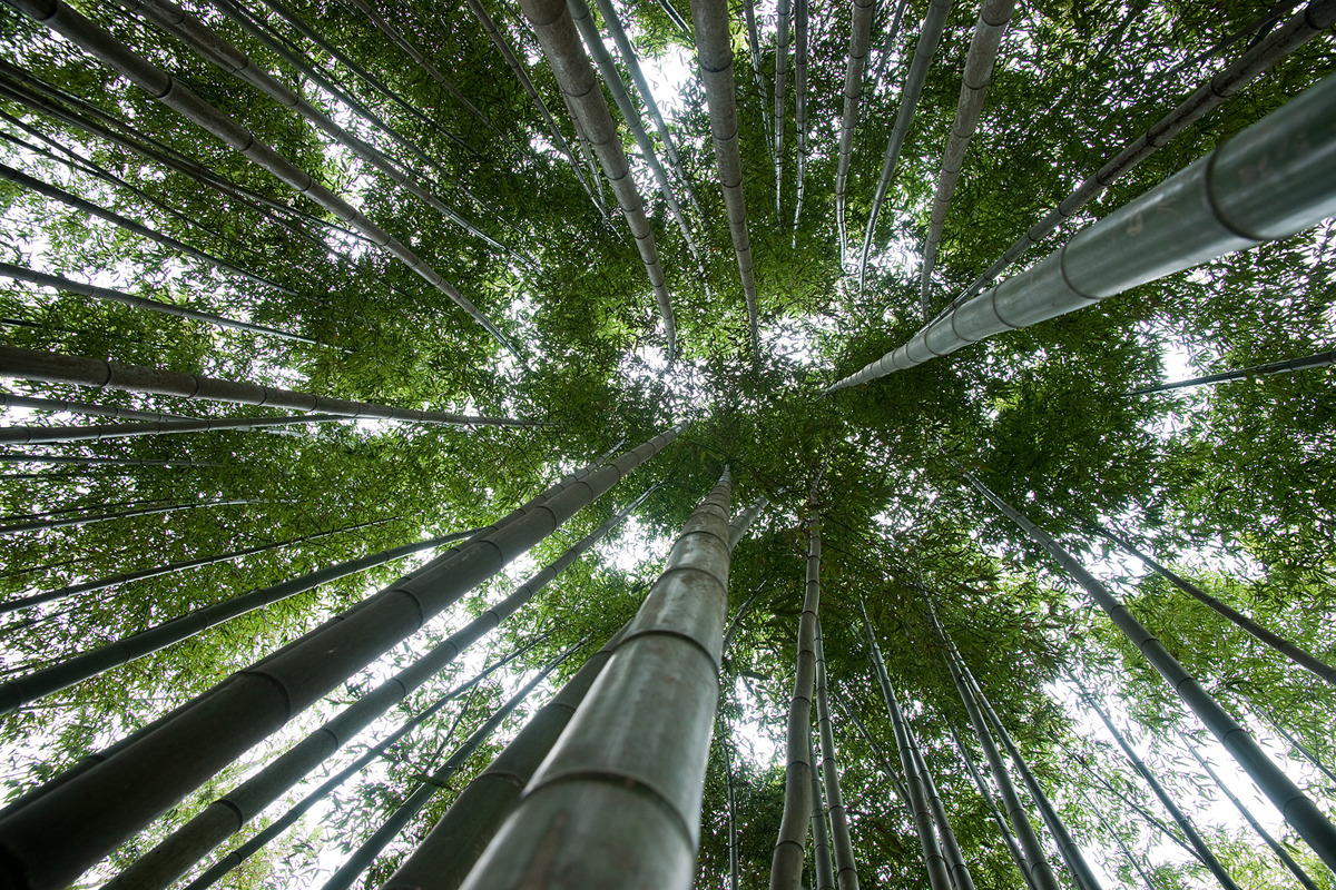 Damyang Bamboo Forest Tour
